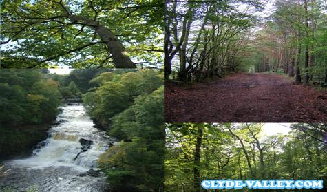 Mengenal 5 Tempat Bagian dari Clyde Valley Woodlands National Nature Reserve